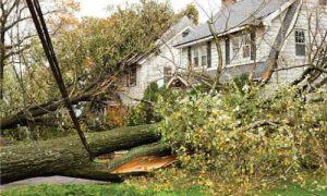 emergency-tree-removal-atlanta