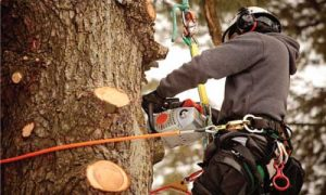 tree-care-maintenance